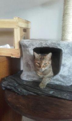 Un chat bien dans ses baskets. Baskets, Animals, Cat Breeds, Animales, Animaux, Hampers, Basket, Animal, Animais