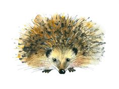 Limited edition print  Hedgehog