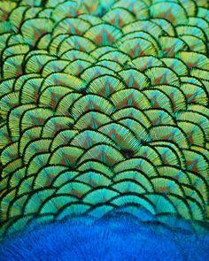 Peacock - beautiful textile.