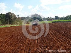 Photo about Planting with chickpea culture - Sowing - Planting. Image of chickpeas, leguminous, freshness - 93002964