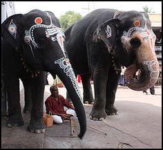 elephant love, India
