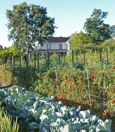 The Andersons grow vegetables—cabbage, tomatoes, onions, and more—for their cooking school, Ramekins.