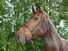Mooi bruin rondgenaaid hoofdstel Turijn gold plated bij kreukiespaardenpret