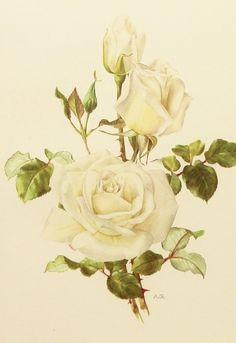 1960s Rose Decor, White Rose Flower Print, Botanical Illustration (To Frame No. 41)