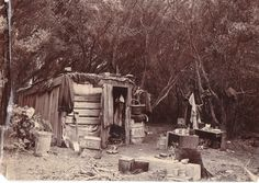 The isolated bush home of the first convict settler pardoned in Van Diemen's Land, at Dilston, on the Tamar River, Northern Tasmania, Australia. Van Diemen's Land, Old Photos, Vintage Photos, First Fleet, Penal Colony, Aboriginal History, Botany Bay, Gothic, Old Farm Houses