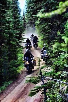 Forest and a dirt road looks like fun