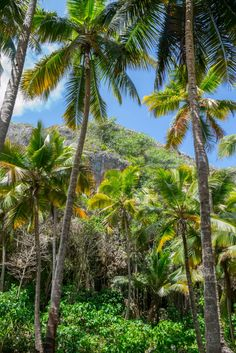 Climbing Route: Pura Navaja, from a distance.- Playa Fronton in Las Galeras, Samaná