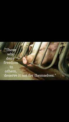 Why finance/support animal cruelty? Please go #vegan