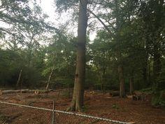De rijk gevulde bossen in de Utrechtse Heuvelrug worden uitgedund. Steeds meer bomen worden gekapt om men in zijn consumentenbehoeften te kunnen blijven voorzien. Valt hieruit te concluderen dat men het streven naar MVO verliest en zijn eigen wensen wel erg voorop stelt?