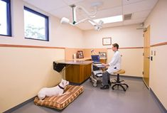 All exam rooms, as well as the treatment area, use rubber floors to make it easier for patients to walk, as many of this practice's patients have difficulty with motor skills. The seven exam rooms offer different furniture and exam table configurations, allowing for more flexibility. - Animal Neurology, Rehab and ER Center, Commerce, Mich. - dvm360