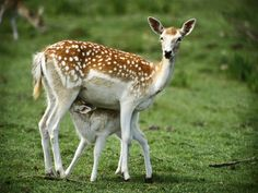 deer | Deer pictures wallpapers images photos | Pictures of Animals