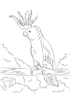 Click to see printable version of Yellow Crested Cockatoo coloring page