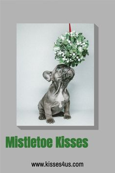 Who are you going to be kissing under the mistletoe this holiday season? Don't forget to order Kisses 4 Us so that you can try a different kiss each day to countdown the days until Christmas! Christmas Date, Romantic Christmas Gifts, Holiday Dates, Days Until Christmas, Christmas Couple, Christmas Countdown, Christmas Wishes, Holiday Ideas, Creative Date Night Ideas