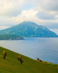 Batanes,Philippines: voted Most Beautiful place to get Trampled In.......the world:)