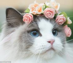 Princess Aurorais not only a bona fide model, she has 87,000 Instagram followers and spends her days being pampered. She recently starred in her first advertisement