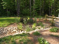 Dry Streams, Rain Gardens and Bog Gardens - eclectic - landscape - other metro - by Earth Design, Inc.