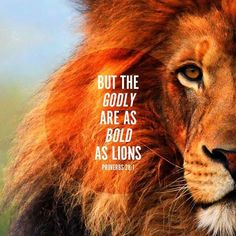 'The wicked flees when no one is pursuing, the upright is bold as a lion...Those who forsake the law sing the praises of the wicked, those who observe the law are angered by them. The wicked do not know what justice means, those who seek Yahweh understand everything' (Proverbs 28, 1-5) Are we bold as lions or weak as the wicked?