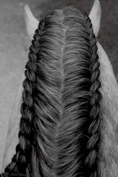 Braided Horse Mane- this is a good option for drafts! Horse Mane Braids, Horse Hair Braiding, Mane Hair, All The Pretty Horses, Beautiful Horses, Animals Beautiful, Beautiful Braids, Amazing Braids, Pretty Braids