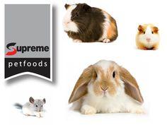 Toda mascota pequeña tiene sus propios requisitos de dieta. Supreme Petfoods colabora con veterinarios y expertos en nutrición para formular productos que satisfacen las necesidades de cada especie.