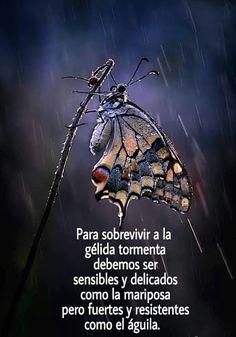 Frases Bonitas Para Facebook: Imagenes Con Frases Para Reflexionar Sobre La Fort...