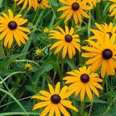 10 No Fail Perennials for Southern gardens