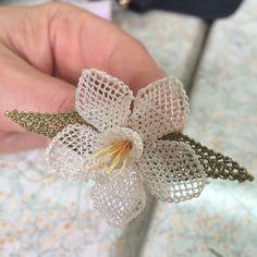 Kursumuzdan nedret ablanın çiçeği
