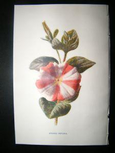Botanical prints.....oooooo