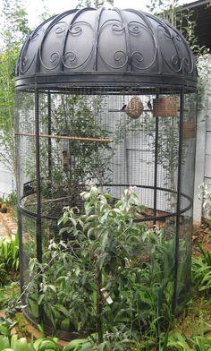 Bc1 French Bird Cage | Products | , Pretoria East | 4seasons4u Wrought Iron Garden Accessories | , Pretoria East