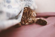 Sleepy baby bear   Taya Iv   Flickr