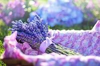 One of the easiest Lavender products I make is Lavender extract. With my tutorial and 3 easy steps, you can easily make your own Lavender extract for baking, cooking, or that special cup of tea after a long day. Lavender Extract, Lavender Buds, Insect Repellent Spray, Same Day Loans, Sugar Scrub Diy, Sugar Scrubs, Candle Supplies, Baby Lotion, Body Powder