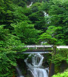 Yakushima by Hitomi Zama. Yakushima, Natural World, Waterfalls, View Photos, Places Ive Been, Asia, Author, Japan, Green