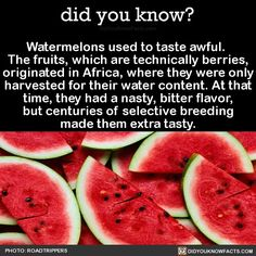 fun fact Watermelons used to taste bad