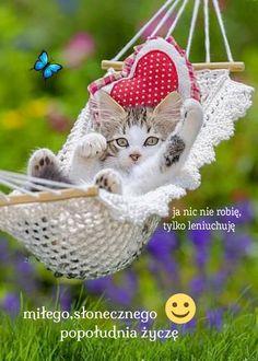 Cute Good Night, Good Night Gif, Good Morning Gif, Good Night Image, Beautiful Nature Wallpaper, Beautiful Gif, Beautiful Birds, Rose Wallpaper, Wallpaper Iphone Cute