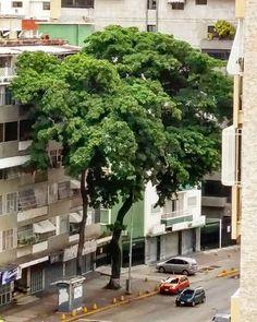 Oxígeno puro a domicilio.  #v_e_n_e_z_u_e_l_a_ #temuestroavenezuela #venezuela_enhd #venezuela_places #maravillasdevenezuela #brujulaturistica #venezuelapcics_ #elnacionalweb #teamovezladkp #paraisotricolorve #retratandoavnzla #mirandahermosa #ig_captures #ig_captures #igmargarita #ig_landscape #ig_worldclub  #ig_caracas #ig_caracas_ #fotomargarita