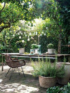 Green day: plants for the garden - Innen Garten - Eng