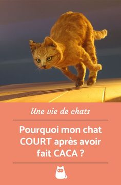 Votre chat part en courant une fois ses besoins terminés ? On vous explique ce comportement singulier...  #AnimauxDrôle #AnimauxDomestiques #ComportementChat #ChatDrole #PourquoiMonChatCourtAprèsAvoirFaitCACA
