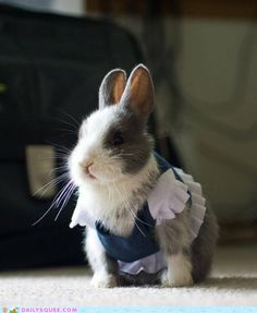 Cute bunny with clothes!