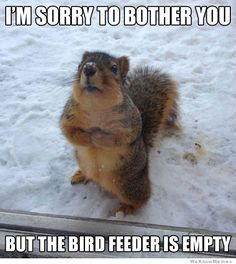 All information about Funny Animal Quotes For Kids. Pictures of Funny Animal Quotes For Kids and many more. Humor Animal, Funny Animal Memes, Animal Quotes, Funny Animal Pictures, Funny Memes, Squirrel Pictures, Funniest Pictures, Funny Photos, Hilarious Animals