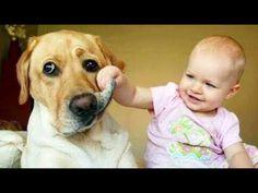 Ces bébés mignons feront fondre votre coeur - bébés drôles riant à la compilation d'ANIMAUX - YouTube