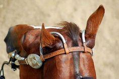 Horse Head (by Hysazu)