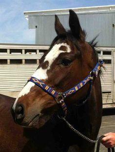 Mama, Mid-atlantic Horse Rescue, 2009 OTTB mare