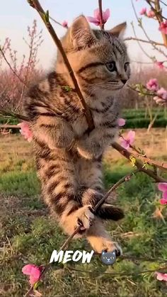 Funny Cute Cats, Cute Baby Cats, Cute Cats And Kittens, Cute Little Animals, Cute Funny Animals, Kittens Cutest, Ragdoll Kittens, Funny Kittens, Kitty Cats