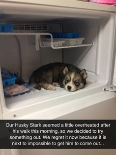 Because I miss Sacha and because I love huskies and because Stark is the best name everrrrrr