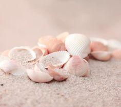 Ocean Vibes :: Summer Dreams :: Mermaid Queen :: Shells on a Beach :: Pink Beach, Pink Sand, Pink Summer, Summer Colors, Flamingo Beach, Summer Pics, Summer Things, Summer Loving, Pink Things