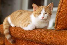 Image result for orange tabby kitten