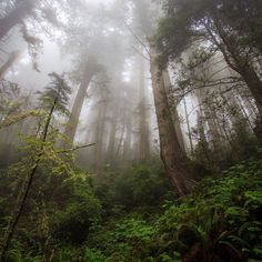 Photograph Forest by kostaymal on 500px