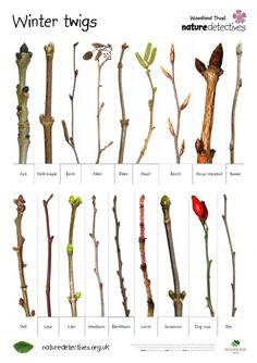 Safe Tree & Wood List | Degu and Chinchilla World