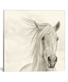 6518aede6 39 Best Horse Pictures ,etc images in 2019 | Colt 45, Equine ...