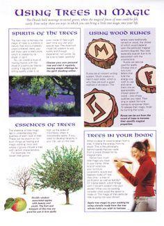 Herbs: Using #Trees in Magic.