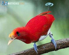 Las aves habitan en todos los biomas terrestres, y también en todos los océano...